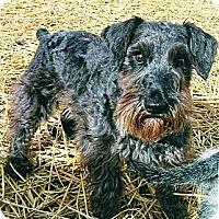 Adopt A Pet :: Heidi - Sharonville, OH