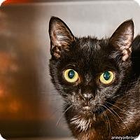 Adopt A Pet :: Joanie - Athens, GA