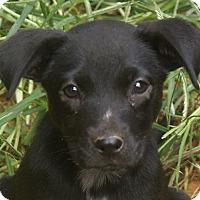 Adopt A Pet :: Cassie - Staunton, VA