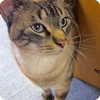 Adopt A Pet :: Beesley - Colmar, PA