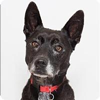 Adopt A Pet :: Jazz - San Luis Obispo, CA