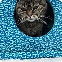 Adopt A Pet :: Suzy Q-LOVE IS AGELESS! - Harrisburg, PA
