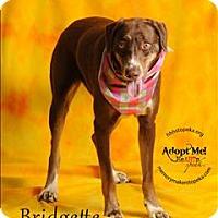 Adopt A Pet :: Bridgette - Topeka, KS