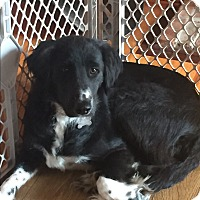 Adopt A Pet :: Abbie - Midwest (WI, IL, MN), WI