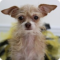 Adopt A Pet :: Roxy - Picayune, MS