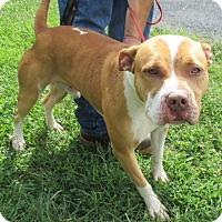 Adopt A Pet :: Radar - Reeds Spring, MO