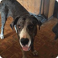 Adopt A Pet :: Cappy - Reno, NV