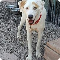 Adopt A Pet :: Titan - Bartonsville, PA
