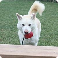 Adopt A Pet :: Leo - Harvard, IL