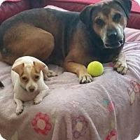 Adopt A Pet :: Sam - Seahurst, WA
