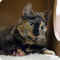 Adopt A Pet :: Cabana - Tucson, AZ