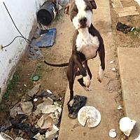 Adopt A Pet :: Artie - Palmdale, CA