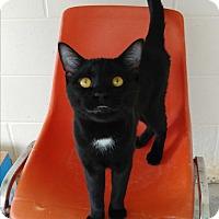 Adopt A Pet :: Kingston - Umatilla, FL
