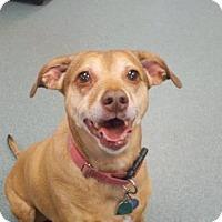 Adopt A Pet :: Zoe - Wichita, KS