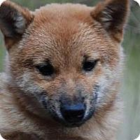 Adopt A Pet :: Rudolph - Antioch, IL