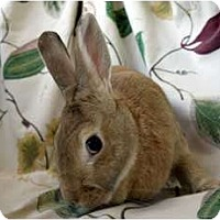 Adopt A Pet :: Honey Bunny - Martinez, CA