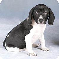 Adopt A Pet :: Dallas - Chicago, IL