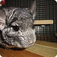 Adopt A Pet :: Effie - Titusville, FL