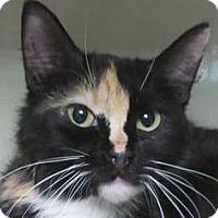 Adopt A Pet :: Kiwi - Redwood City, CA
