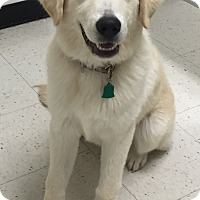 Adopt A Pet :: Tundra - geneva, FL