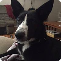 Adopt A Pet :: Pumpki - Colorado Springs, CO