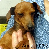 Adopt A Pet :: Anna - baltimore, MD