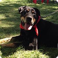 Adopt A Pet :: Duncan - Palatine, IL