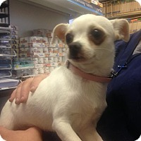 Adopt A Pet :: Angel - East McKeesport, PA