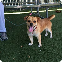 Adopt A Pet :: Cisco - Redondo Beach, CA