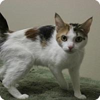Adopt A Pet :: Luna - Suffolk, VA