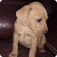 Adopt A Pet :: Shirley - Warrenton, NC