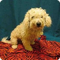 Adopt A Pet :: *SAN - Upper Marlboro, MD