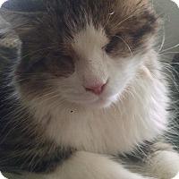 Adopt A Pet :: Arya - Scranton, PA