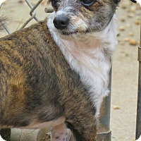 Adopt A Pet :: Wizard - West Babylon, NY