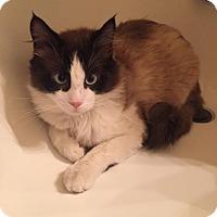 Adopt A Pet :: Lanval - Ennis, TX