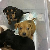 Adopt A Pet :: Tanner - Goldsboro, NC