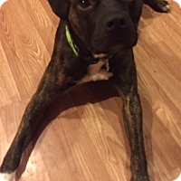 Adopt A Pet :: Reggie - Chambersburg, PA