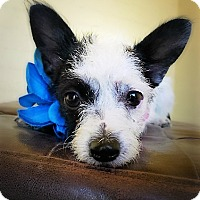 Adopt A Pet :: Beulla - Casa Grande, AZ