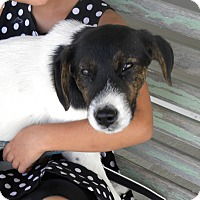Adopt A Pet :: Wendall - Germantown, OH