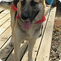 Adopt A Pet :: S1047    Duke - Bay Springs, MS