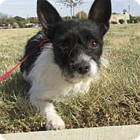 Adopt A Pet :: Cid - North Richland Hills, TX