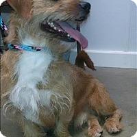 Adopt A Pet :: Lucky - Madison, NJ