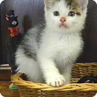 Adopt A Pet :: Kyle - Columbus, NE