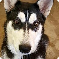 Adopt A Pet :: Bonnie - Apple valley, CA
