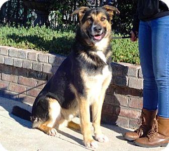 Shepherd (Unknown Type) Mix Dog for adoption in Lathrop, California - Zeppelin