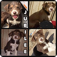 Adopt A Pet :: Jubilee - New Milford, CT