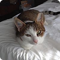 Adopt A Pet :: Opal - Atlanta, GA