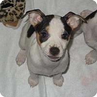 Adopt A Pet :: Peppermint - Garland, TX