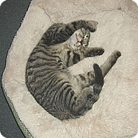 Adopt A Pet :: PANDORA - Hamilton, NJ