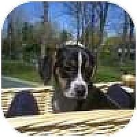 Adopt A Pet :: Justin - Novi, MI